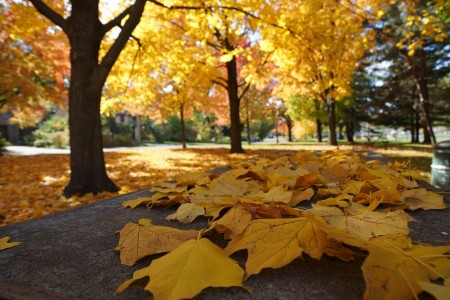 autumn 2898551_1280